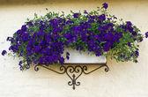 Klassische Pflanzgefäß Blumentopf auf einer Ziegel-Wand — Stockfoto