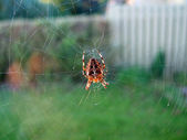 Spider on a web net — Stock Photo