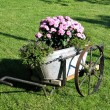 Garden decor in old wagon — Stock Photo #8933491