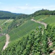 Stock Photo: Vineyards fields in Mosel Germany