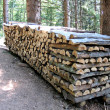 Stack of firewood logs timber — Stock Photo