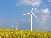 Wind turbines in rapes field - Alternative energy — Stock Photo