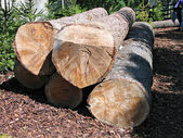 Pile of heavy wood logs — Stock Photo