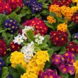 Bunch of multi colored flowers arranged together — Photo