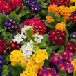 Bunch of multi colored flowers arranged together — Stock Photo