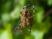 蜘蛛网上的净 — 图库照片