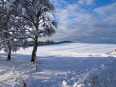 Beautiful winter landscape background — Stock Photo