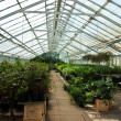 Inside a greenhouse full of plants and flowers — Stock Photo #9213962