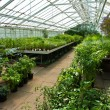 Stock Photo: Inside greenhouse full of plants and flowers