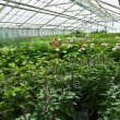 Inside a greenhouse full of plants and flowers — Stock Photo #9213973