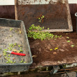 Bedding nursery table in a greenhouse — Foto de Stock