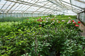 Inside a greenhouse full of plants and flowers — Stockfoto