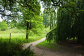 Beautiful footpath in summer green forest — Stock Photo