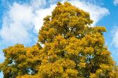 Осеннее дерево с фон неба — Стоковое фото