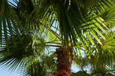 Green palm tree background — Stockfoto