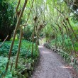 Stock Photo: Footpath in wild garden
