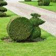 Decorative cut of bushes in a garden — Foto Stock