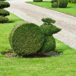 Decorative cut of bushes in a garden — Stock Photo
