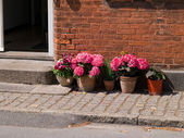 Colorful flower pots by a house — Stock Photo