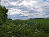 Lush green fields sea background — Stock Photo