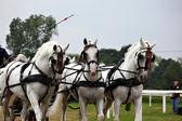 Pferdekutschenfahrt — Stockfoto