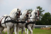 Horse drawn carriage — Stock Photo