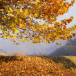 Stock Photo: Autumn Scenery