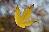 Autumn Yellow Leaf — Stock Photo