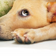 Closeup portrait of cute dog — Stock Photo #8757475