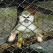 Baby monkey in a cage -  