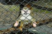 Dziecko małpa w klatce — Zdjęcie stockowe