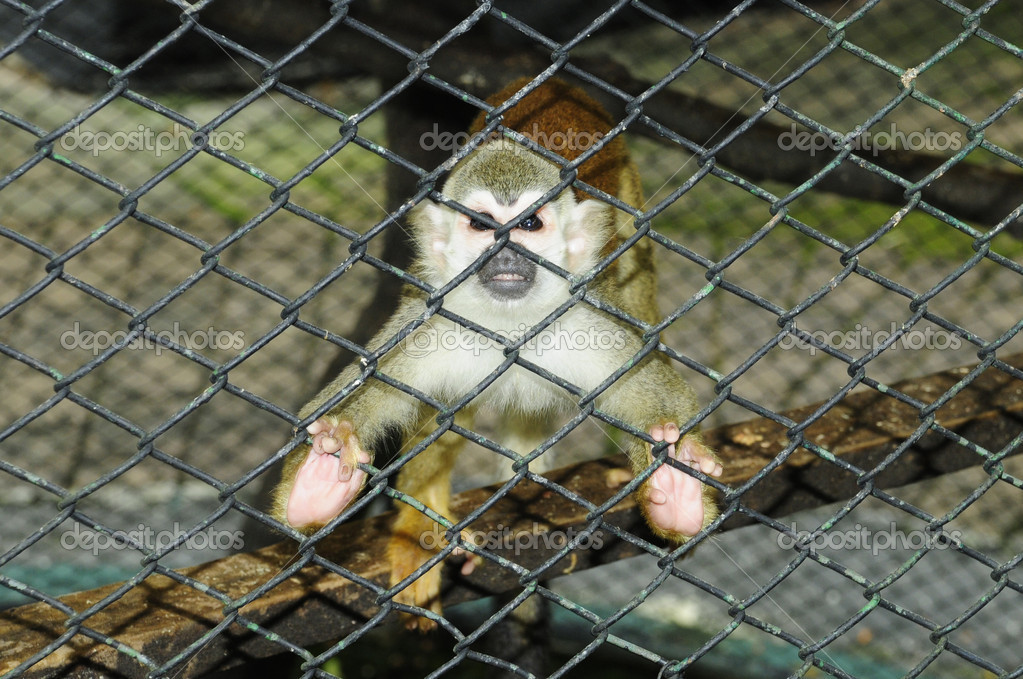 Baby monkey in a cage — Stock Photo #8334389