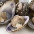Stock Photo: Fresh clams