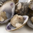 Fresh clams - Stock Photo