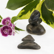 Zen stones and flowers — Stock Photo