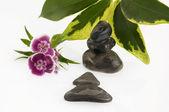 Zen stones and flowers — Stock Photo