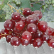Pink grapes — Stock Photo #9091954
