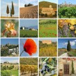 Collage with fantastic tuscan landscape — Stock Photo #10054043
