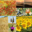 Collage with scenic tuscan landscape images — Stock Photo