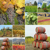 Wine agriculture collage — Stock Photo