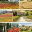 Tuscan countryside — Stock Photo #8305464