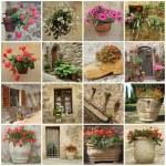 Gardening collage — Stock Photo #8305661
