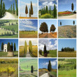 Collage with italian cypresses — Stock Photo