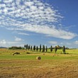 Beauty of tuscan landscape — Stock Photo #8306389