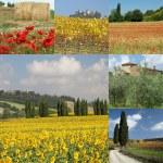 Tuscany collage — Stock Photo