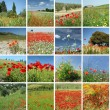 Landscape with red poppies collage — 图库照片