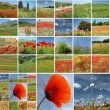 Meadow in spring collage — Stock Photo #8306925