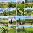 Green vineyards collage — Stock Photo