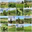 Green vineyards collage — Stock Photo