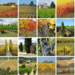 Colorful vineyard collage — Stock Photo